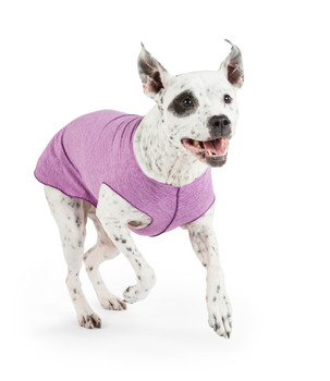 Sun Shield Pet Dog Tee - Violet Heather