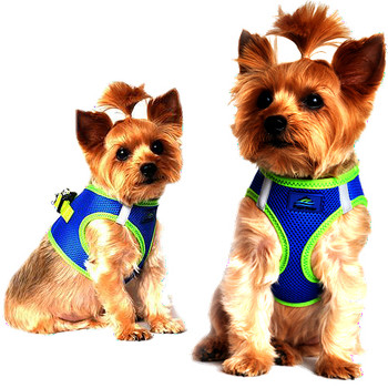 American River Ultra Choke Free Dog Harness - Cobalt Blue