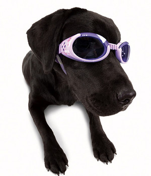 Lilac Pet Dog Doggles Sunglasses ILS with Flowers and Purple Lens