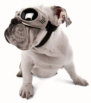 Bulldog with Chrome Originalz Pet Dog Sunglasses by Doggles