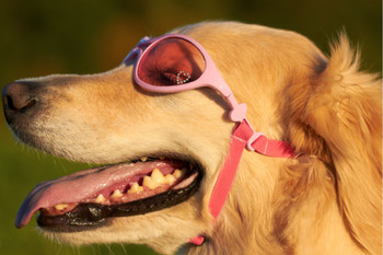 Pink Rubber Framed K9 Optix Pet Dog Sunglasses