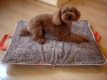 Travel Tote Pet Dog Carrier / Bed in Bay Brown