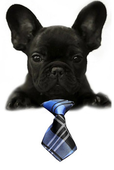 Blue Plaid Small Dog Neck Tie