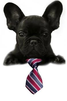 Classic Stripe Small Dog Neck Tie