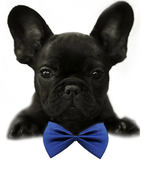 87e6df89b27 Black Solid Small Dog Bow Tie | Pets Love To Shop