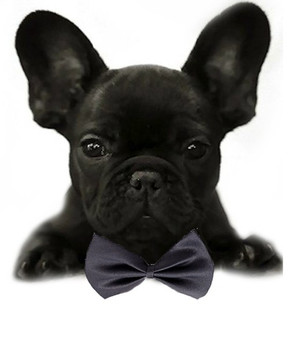 Charcoal Gray Solid Small Dog Bow Tie