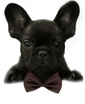Dark Chocolate Brown Solid Small Dog Bow Tie