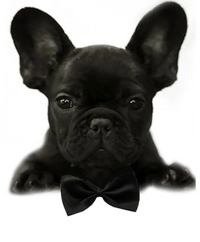 Black Solid Small Dog Bow Tie