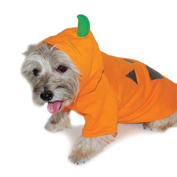 Pumpkin Dog Sweatshirt / Costume