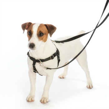 Black Freedom No-Pull Dog Harness & Optional Leads
