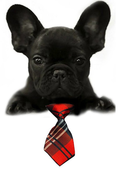Red Plaid Small Dog Neck Tie
