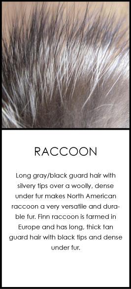 racoon-fur-care.jpg