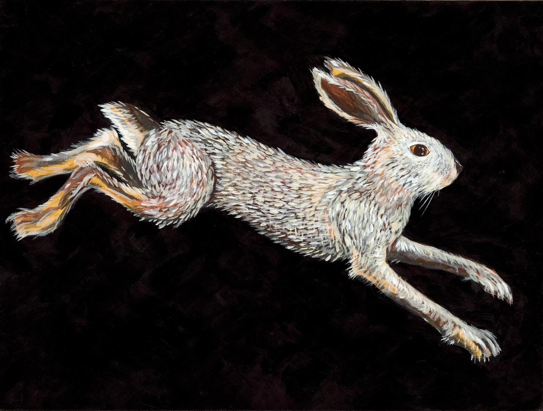 Swamp Rabbit (Sylvilagus aquaticus- SGCN)