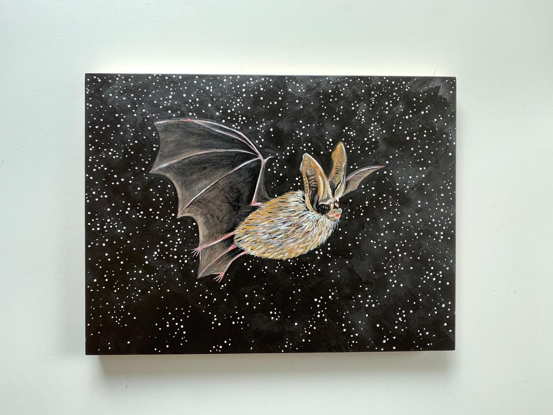 Townsend's big-eared bat (Corynorhinus townsendii - SGCN)