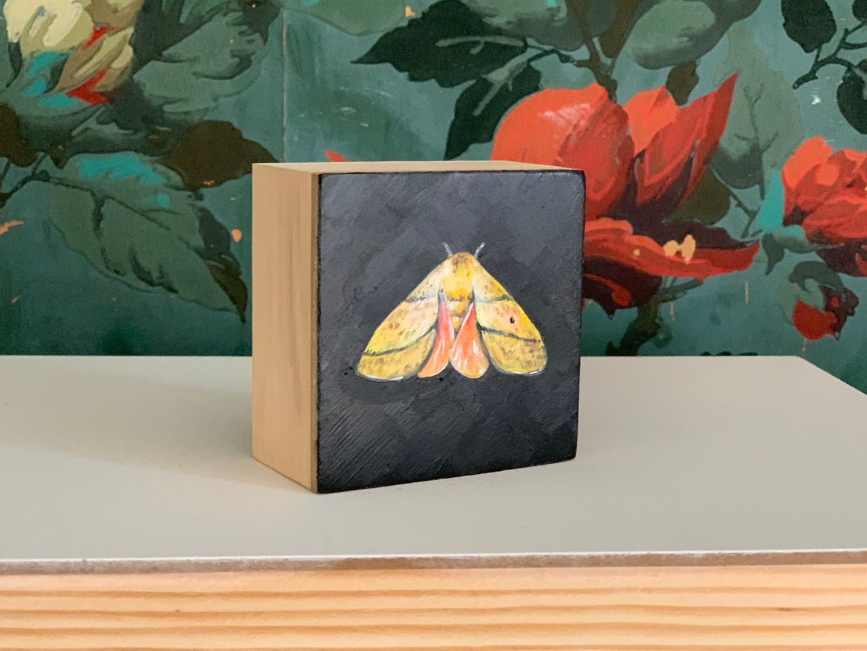 Royal moth (Sphingicampa blanchardi-SGCN)
