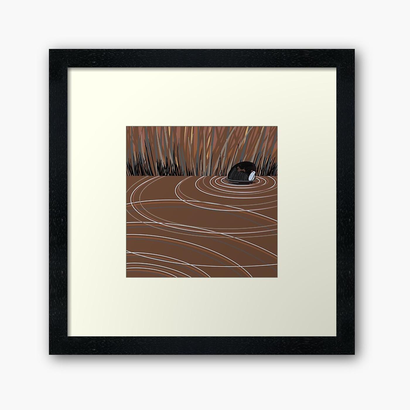 Texas Pigtoe (Fusconaia askewi)- Threatened