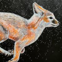 Swift Fox (Vulpes velox - SGCN)