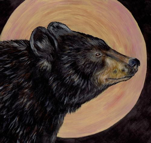 Black Bear (Ursus americanus - Threatened)