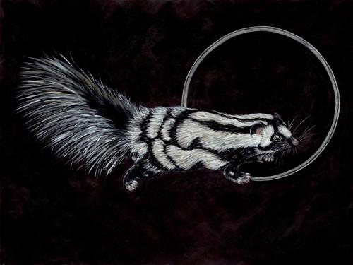 Western Spotted Skunk (Spilogale gracilis - SGCN)