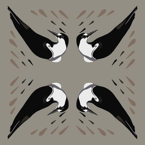 Sooty Tern (Sterna fuscata)