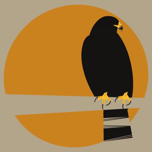 Zone-Tailed Hawk (Buteo albonotatus)- Threatened