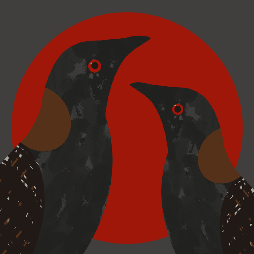 Black Rail (Laterallus jamaicensis)- Threatened Texas Bird