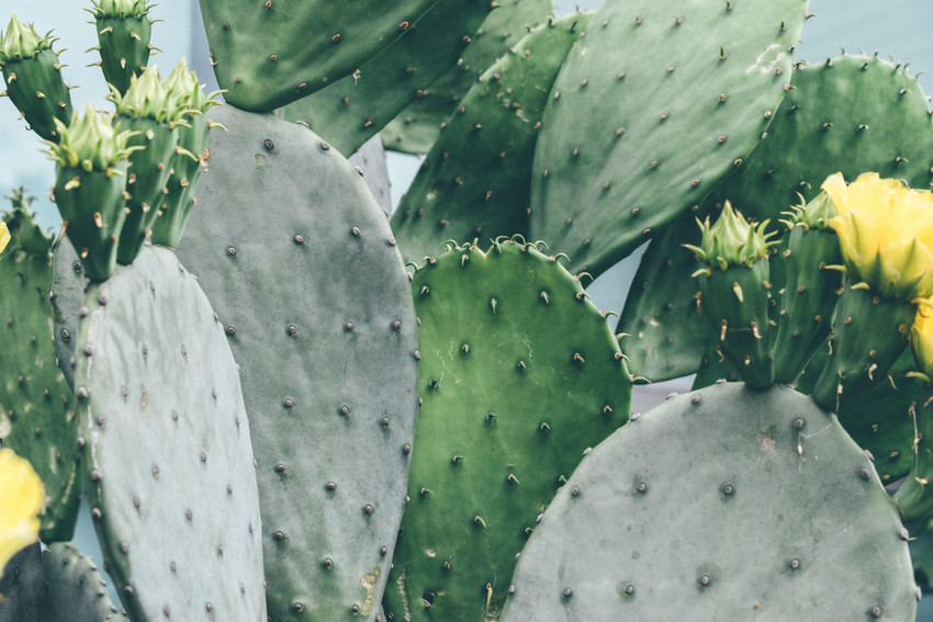 Fort Worth Botanic Garden | BRIT : Explore the Shapes and Colors of Cacti by Making Matisse-Inspired Art