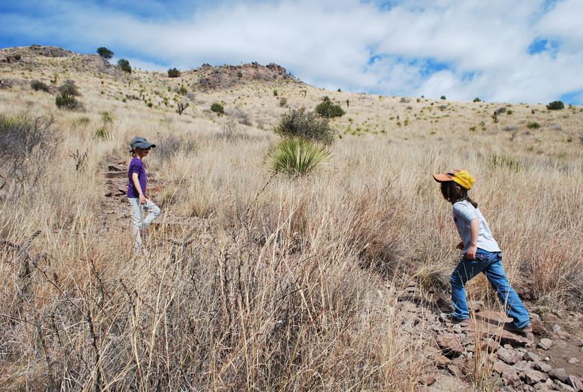 Davis Mountain Cottontail