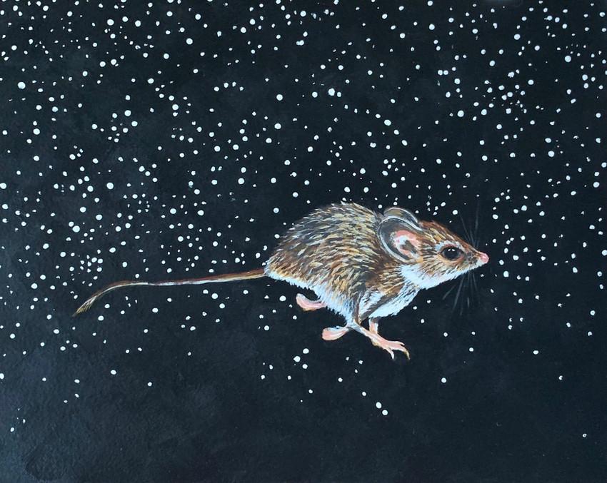 Meet Texas' Threatened Palo Duro Mouse