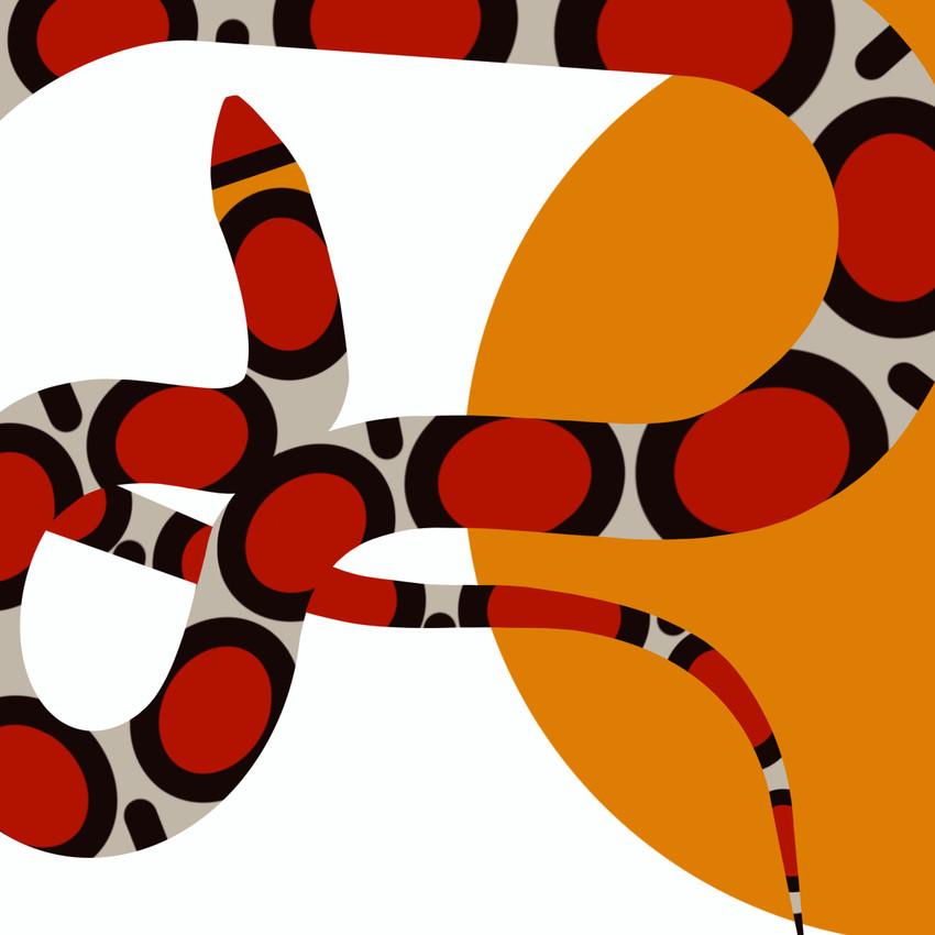 Northern Scarlet Snake- (Cemophora coccinea copei) Texas Threatened Reptile
