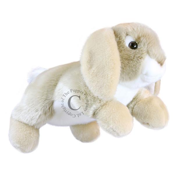 Lop Rabbit