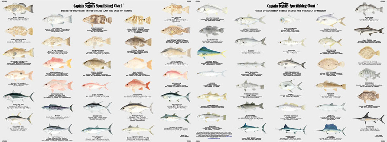 Captain Segull Chart - Species: Fishes of the Gulf of Mexico and Florida  Identification Chart