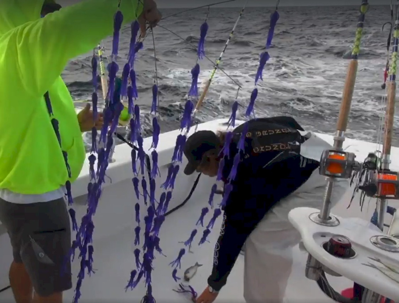 Squidnation Fat Daddy Squid Dredge - Electric Blue