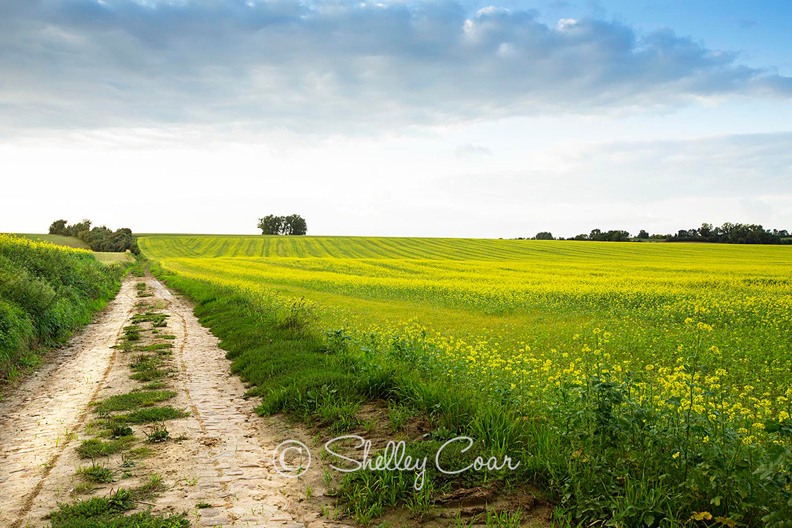 Photograph of a cobblestone road leading into the Belgian countryside near Melin by Shelley Coar.