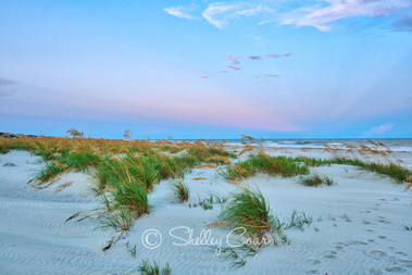 A Fripp Island, South Carolina beach at sunset. Photograph by Shelley Coar.