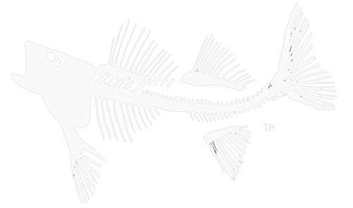 Coastal Cotton Large Fish Window Decal White