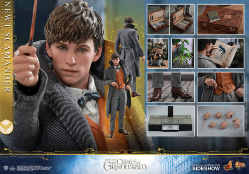 NEWT SCAMANDER Fantastic Beast Sixth Scale Figure by Hot Toys 1:6 Figure