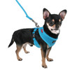 Puppia Soft Mesh Harness in sky blue on chihuahua
