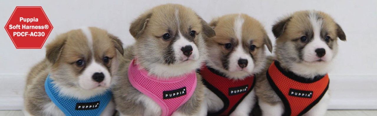 Puppia Soft Mesh Harness on puppies