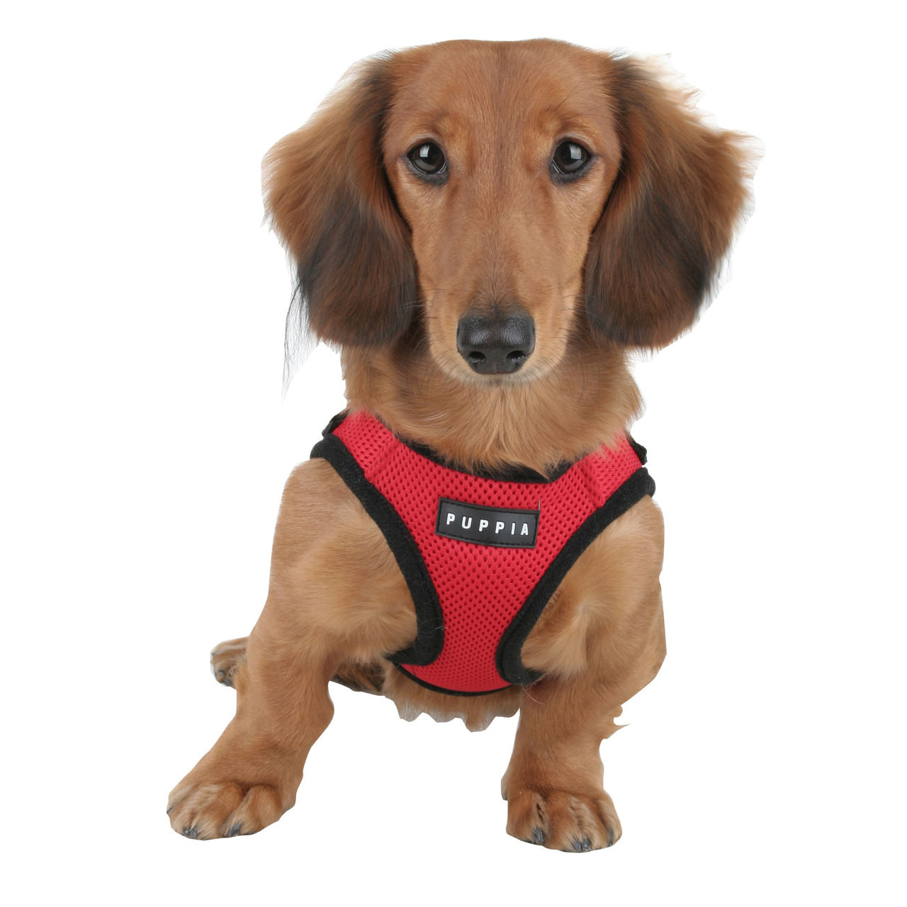 Puppia Soft Mesh Vest in Red on Dachshund