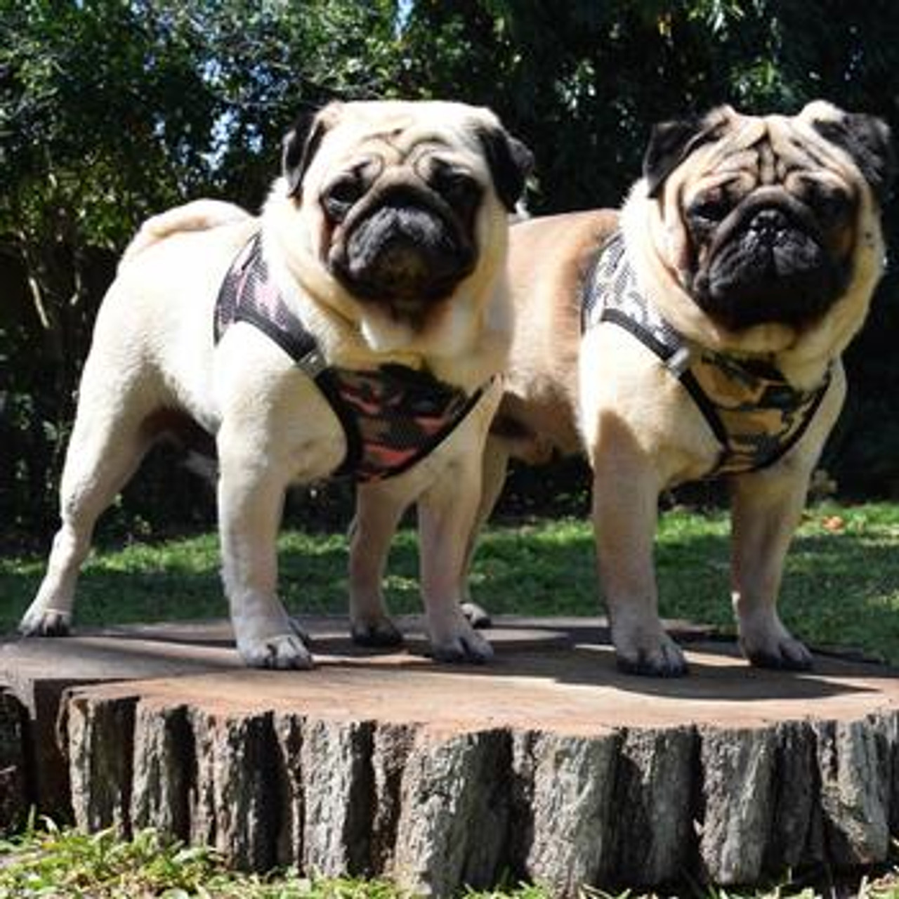 American River Dog Harness Camouflage Collection