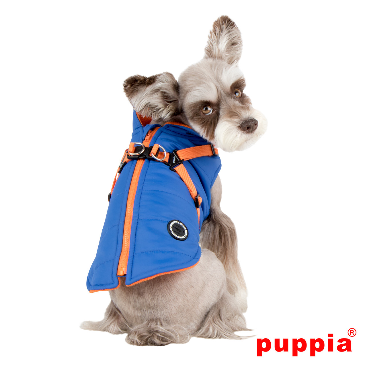 Puppia Mountaineer Coat in blue on dog model