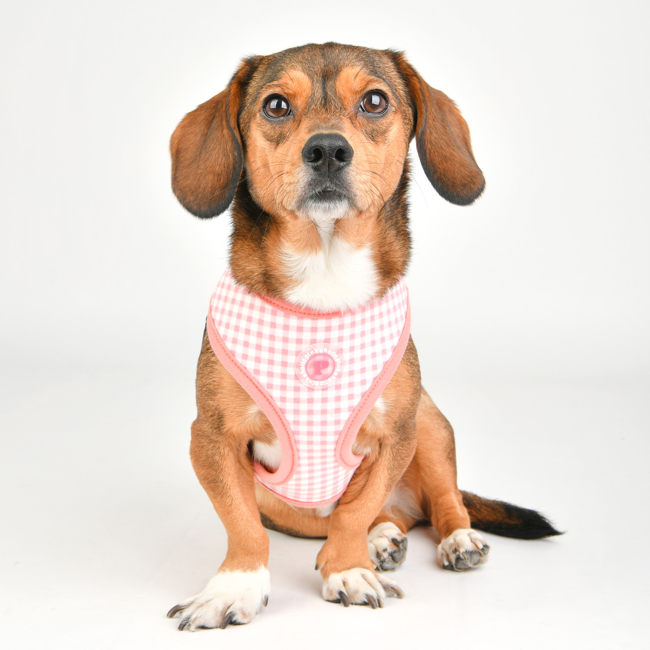 Pinkaholic Alaia Harness (by Puppia)
