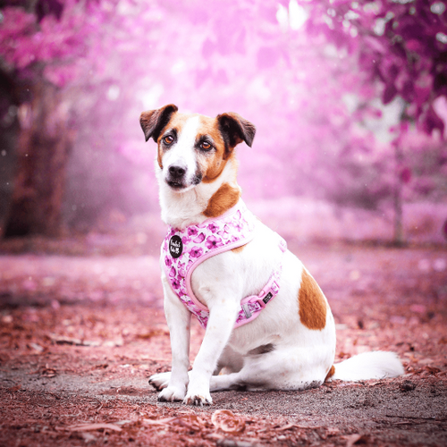 Pawfect Pals Reversible Harness-You Give Me Butterflies-FINAL SALE
