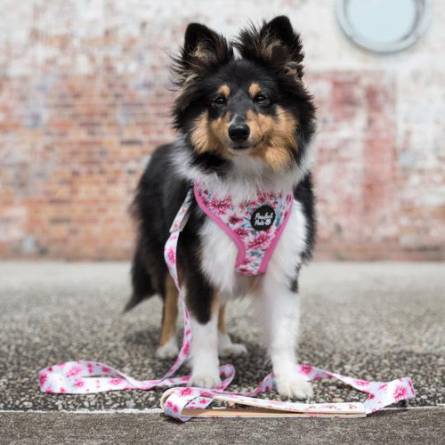 Pawfect Pals Reversible Harness-Pick Of The Bunch-FINAL SALE
