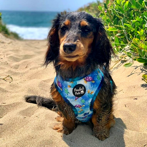 Pawfect Pals Reversible Harness-Shell Yeah-FINAL SALE