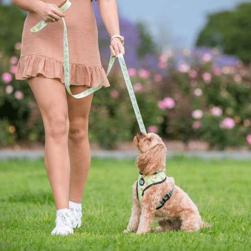 Pawfect Pals Reversible Harness-Don't Worry, Don't Hurry-FINAL SALE