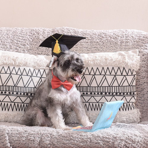 Laptop Bark To School Dog Toy