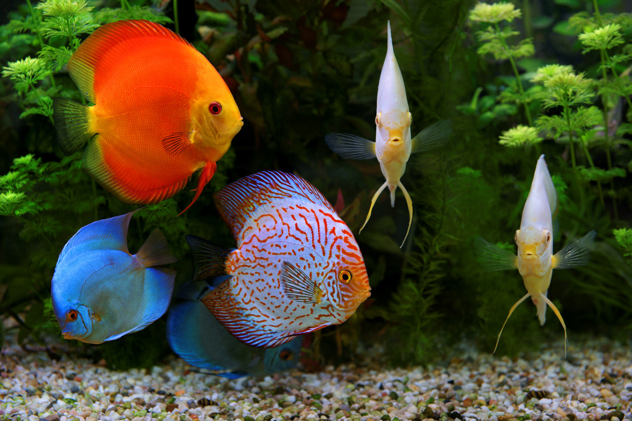 a tropical reef