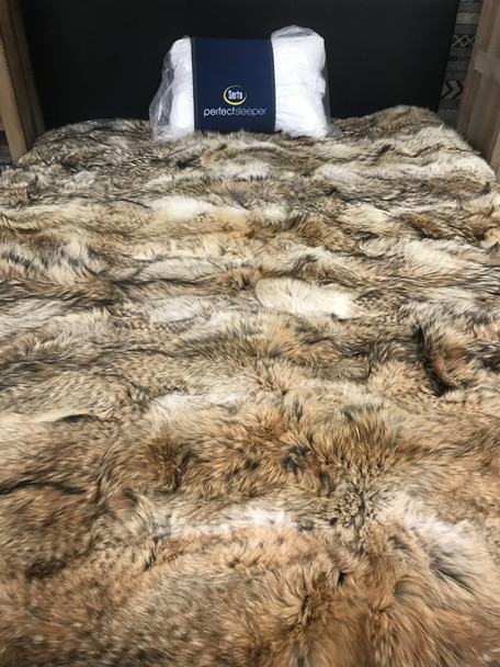 Full Pelt Coyote Fur Blanket Size Twin / Fur Throw Only